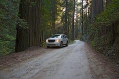 εθνικός δρόμος πάρκων redwood στοκ φωτογραφία με δικαίωμα ελεύθερης χρήσης
