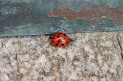 Εθνικός καθεδρικός ναός της Ουάσιγκτον - ladybug στοκ εικόνες με δικαίωμα ελεύθερης χρήσης