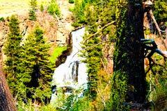 Εθνικός καταρράκτης πάρκων Yellowstone που περιβάλλεται από τις δασώδεις περιοχές και τους απότομους βράχους στοκ εικόνα με δικαίωμα ελεύθερης χρήσης