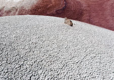 εθνικός σκόπελος Utah πάρκων στοκ φωτογραφίες