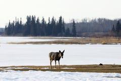 εθνικός χειμώνας πάρκων νη&sig στοκ φωτογραφίες με δικαίωμα ελεύθερης χρήσης