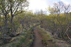 Εθνικό ίχνος πάρκων Skaftafell Στοκ φωτογραφία με δικαίωμα ελεύθερης χρήσης