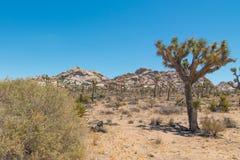 Εθνικό δρυμός δέντρων του Joshua - τοπίο του πάρκου που περιέχει την έρημο, τους θάμνους, το yucca, και τα δέντρα joshua στοκ φωτογραφία με δικαίωμα ελεύθερης χρήσης
