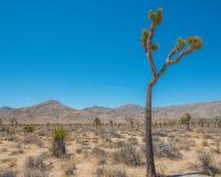 Εθνικό δρυμός δέντρων του Joshua - τοπίο του πάρκου που περιέχει την έρημο, τους θάμνους, το yucca, και τα δέντρα joshua στοκ εικόνες με δικαίωμα ελεύθερης χρήσης