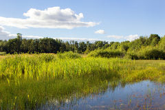 Εθνικό καταφύγιο άγριας πανίδας Finley στοκ εικόνες