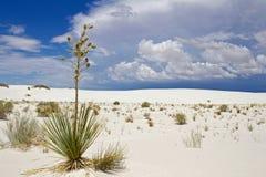 εθνικό λευκό άμμων μνημείων στοκ φωτογραφίες με δικαίωμα ελεύθερης χρήσης