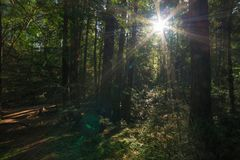 Εθνικό μνημείο ξύλων Muir στοκ φωτογραφία
