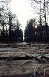 εθνικό μονοπάτι πάρκων yosemite Στοκ Φωτογραφία