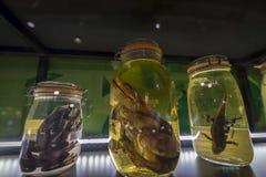 Εθνικό μουσείο επιστήμης Στοκ Φωτογραφίες