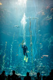 Εθνικό Μουσείο της θαλάσσιας βιολογίας και του ενυδρείου Στοκ Εικόνα