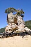 εθνικό νέο πάρκο tasman Ζηλανδία Abel Στοκ Εικόνες