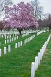 Εθνικό νεκροταφείο του Άρλινγκτον με το όμορφες άνθος κερασιών και τις ταφόπετρες, Washington DC στοκ φωτογραφίες