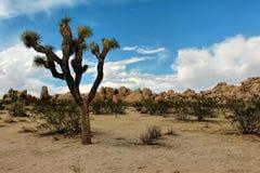 Εθνικό πάρκο δέντρων του Joshua, έρημος Μοχάβε, Καλιφόρνια Στοκ εικόνες με δικαίωμα ελεύθερης χρήσης