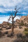 Εθνικό πάρκο δέντρων του Joshua, Καλιφόρνια Στοκ φωτογραφία με δικαίωμα ελεύθερης χρήσης
