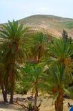 Εθνικό πάρκο Ισραήλ Prat Ein στοκ φωτογραφία με δικαίωμα ελεύθερης χρήσης