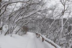 Εθνικό πάρκο λιμνών Plitvice, χιονισμένη φύση Φυσικό τοπίο του παγωμένου εθνικού πάρκου λιμνών Plitvice Στοκ Εικόνες