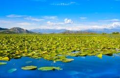 Εθνικό πάρκο λιμνών Skadar, Μαυροβούνιο Στοκ Εικόνα