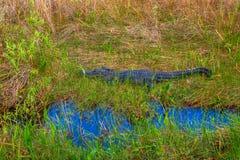 Εθνικό πάρκο ΛΦ-Everglades Στοκ Εικόνες