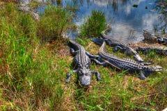 Εθνικό πάρκο ΛΦ-Everglades Στοκ Εικόνα
