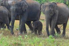 εθνικό πάρκο της οικογενειακής Κένυας ελεφάντων amboseli Στοκ Εικόνες
