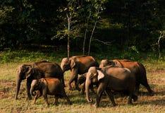 εθνικό πάρκο της οικογενειακής Κένυας ελεφάντων amboseli Στοκ Φωτογραφίες