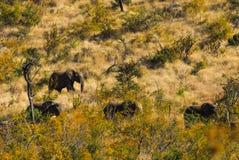 εθνικό πάρκο της οικογενειακής Κένυας ελεφάντων amboseli στοκ εικόνα με δικαίωμα ελεύθερης χρήσης