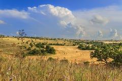 Εθνικό πάρκο της Alta Murgia: Cornfield που ολοκληρώνεται από τα σύννεφα Apulia Ιταλία Στοκ εικόνα με δικαίωμα ελεύθερης χρήσης