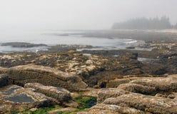 εθνικό πάρκο του Maine acadia Στοκ εικόνες με δικαίωμα ελεύθερης χρήσης