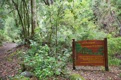 Εθνικό πάρκο του Vicente Perez Rosales, Χιλή στοκ φωτογραφία με δικαίωμα ελεύθερης χρήσης