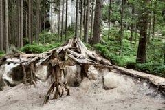 Εθνικό πάρκο των βράχων adrspach-Teplice Πόλη βράχου cesky τσεχική πόλης όψη δημοκρατιών krumlov μεσαιωνική παλαιά Στοκ Εικόνες