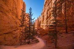 Εθνικό πάρκο φαραγγιών του Bryce Στοκ φωτογραφία με δικαίωμα ελεύθερης χρήσης