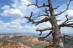 Εθνικό πάρκο φαραγγιών του Bryce Στοκ εικόνα με δικαίωμα ελεύθερης χρήσης