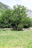 Εθνικό πάρκο Aigüestortes στα καταλανικά Πυρηναία, Ισπανία στοκ φωτογραφία με δικαίωμα ελεύθερης χρήσης