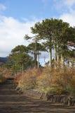Εθνικό πάρκο Conguillio στη νότια Χιλή Στοκ Εικόνες