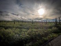 Εθνικό πάρκο Denali ανατολής Στοκ εικόνες με δικαίωμα ελεύθερης χρήσης