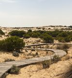 Εθνικό πάρκο Doñana Στοκ φωτογραφίες με δικαίωμα ελεύθερης χρήσης