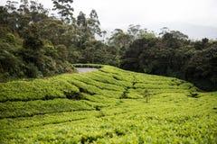 Εθνικό πάρκο Eravikulam στοκ εικόνες