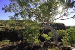 Εθνικό πάρκο 4 Hill χορτοταπήτων Στοκ εικόνες με δικαίωμα ελεύθερης χρήσης