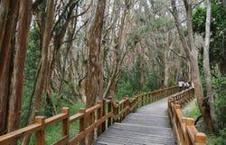 Εθνικό πάρκο Los Arrayanes Στοκ εικόνες με δικαίωμα ελεύθερης χρήσης