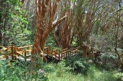 Εθνικό πάρκο Los Arrayanes. Bariloche. Αργεντινή. Στοκ φωτογραφία με δικαίωμα ελεύθερης χρήσης