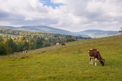 Εθνικό πάρκο Magura (πάρκο Narodowy Magurski) Στοκ Φωτογραφίες