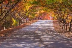 Εθνικό πάρκο Naejangsan στην εποχή φθινοπώρου, Νότια Κορέα Στοκ Φωτογραφία