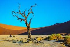 Εθνικό πάρκο namib-Naukluft Στοκ Φωτογραφίες