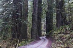 εθνικό πάρκο redwood redwoods Στοκ εικόνα με δικαίωμα ελεύθερης χρήσης