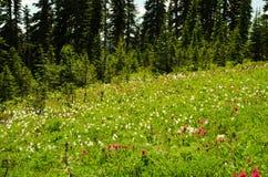 Εθνικό πάρκο Reinier Στοκ εικόνα με δικαίωμα ελεύθερης χρήσης