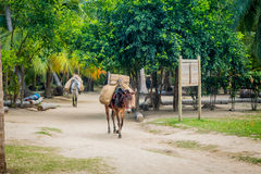 Εθνικό πάρκο Tayrona, Κολομβία Στοκ εικόνες με δικαίωμα ελεύθερης χρήσης