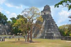 Εθνικό πάρκο Tikal Στοκ εικόνα με δικαίωμα ελεύθερης χρήσης