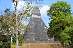 Εθνικό πάρκο Tikal Στοκ Εικόνα