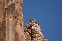 εθνικό πάρκο Utah zion Στοκ Εικόνες
