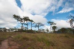 Εθνικό πάρκο Uttaradit dao soi Phu Στοκ φωτογραφία με δικαίωμα ελεύθερης χρήσης